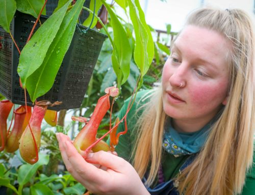 Are you brave enough to touch a deadly meat-eating plant?